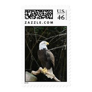 Eagle Stamp