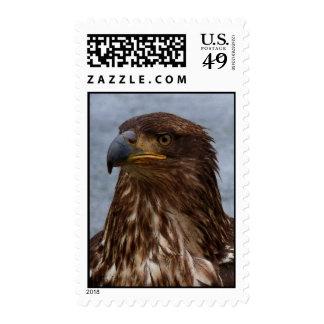 Eagle Stare Postage Stamp