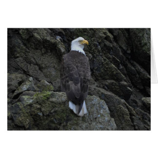 Eagle Tarjeta Pequeña