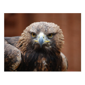 Eagle Tarjeta Postal
