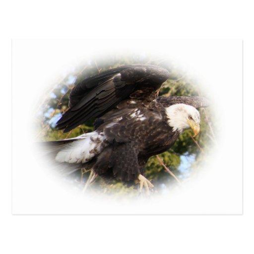 Eagle uno tarjeta postal