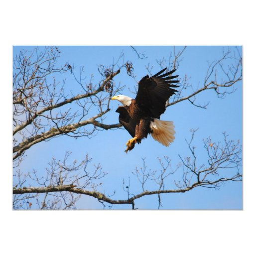 "Eagle With Fish 2 5"" X 7"" Invitation Card"