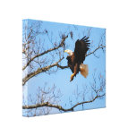 Eagle With Fish 2 Canvas Print