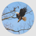 Eagle With Fish 2 Sticker