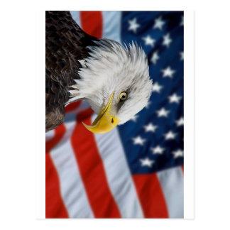 Eagle y bandera tarjetas postales