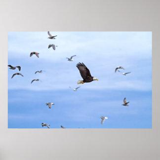 Eagle y el volar de las gaviotas poster
