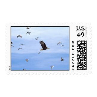 Eagle y el volar de las gaviotas