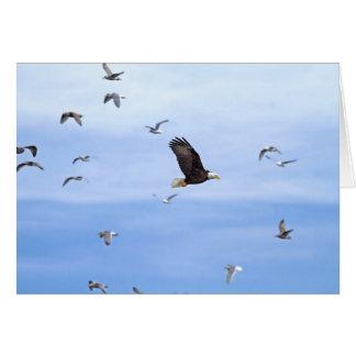 Eagle y el volar de las gaviotas tarjeta de felicitación