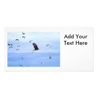 Eagle y el volar de las gaviotas tarjetas fotograficas