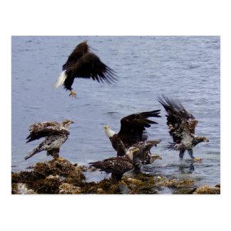 Eagles calvo en la playa, isla de Unalaska Tarjetas Postales