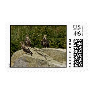 Eagles calvo jóvenes Castle Rock Shumagin Islan
