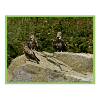 Eagles calvo jóvenes Castle Rock Shumagin Islan Tarjeta Postal