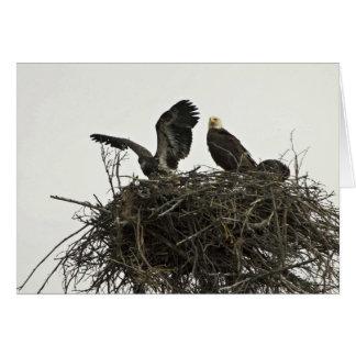 Eagles calvo que jerarquiza en las islas y el visi tarjeta
