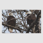 Eagles calvo vigilante etiquetas