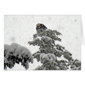 Eagles Cuddling in the Snow Card