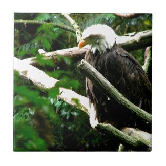 Eagles Nest Ceramic Tile