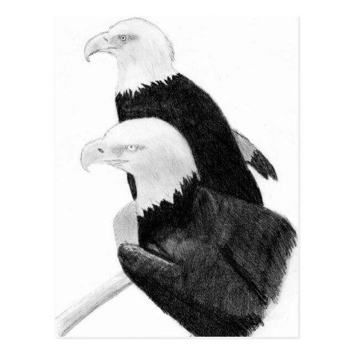 eagles post card