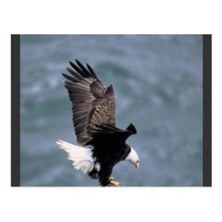 Eagles Strong Postcard
