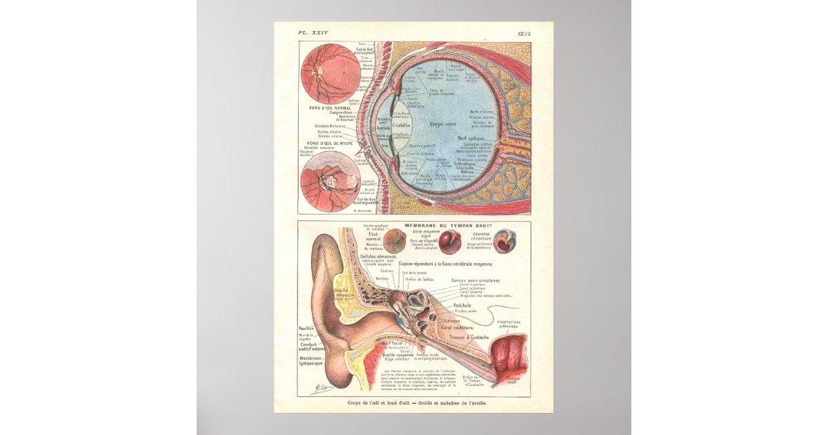 Ear & Eye Anatomy Poster in French | Zazzle.com
