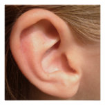 Ear Poster