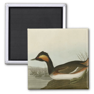 Eared Grebe 2 Inch Square Magnet