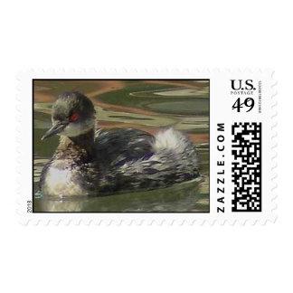 Eared Grebe Stamp