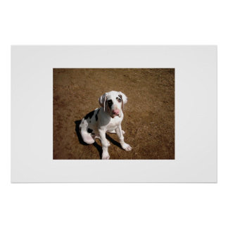 Earl The Great Dane Poster