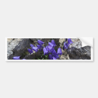 Earleaf bellflower (Campanula cochleariifolia) Bumper Sticker