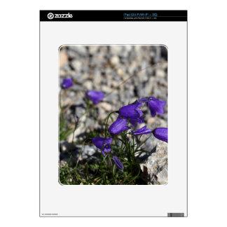 Earleaf bellflower (Campanula cochleariifolia) iPad Decals