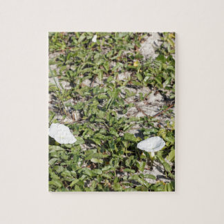 Early Beach Sand Morning Glories Jigsaw Puzzle