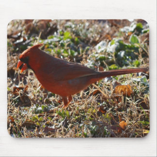 Early Bird gets the Seed Mousepads