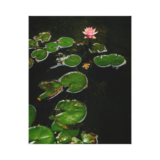 Early bloom in the lily pad pond canvas print