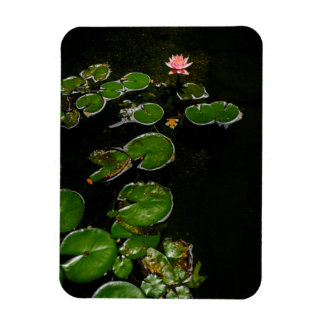 Early bloom in the lily pad pond magnet