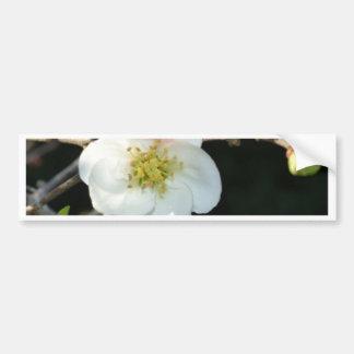 Early Bloomer Bumper Sticker