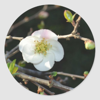 Early Bloomer Classic Round Sticker