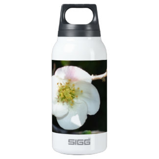 Early Bloomer Insulated Water Bottle