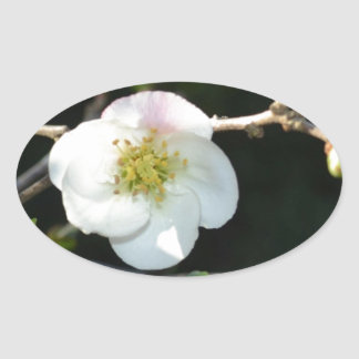 Early Bloomer Oval Sticker