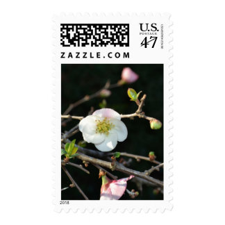 Early Bloomer Postage