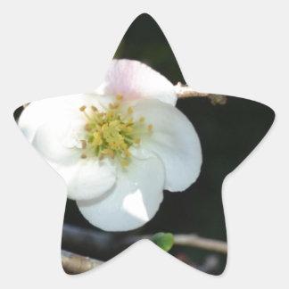 Early Bloomer Star Sticker