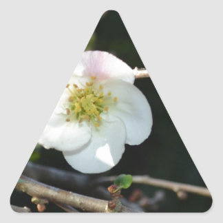 Early Bloomer Triangle Sticker