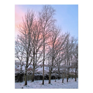Early Morn Snowy Trees Photographic Print