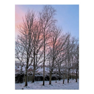 Early Morn Snowy Trees Poster