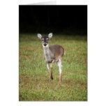 Early morning deer card