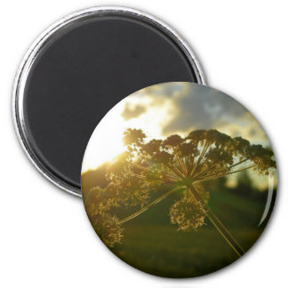 Early morning flower 2 inch round magnet