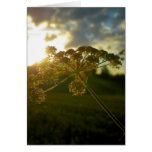 Early morning flower greeting cards
