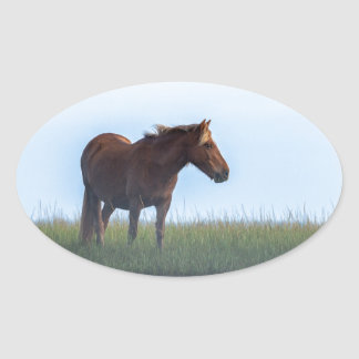 Early Morning Horse Oval Sticker