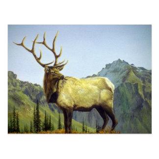 Early morning mist, Elk Postcard