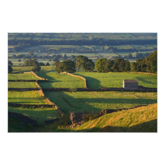 Early morning near Askrigg, Yorkshire Dales Poster