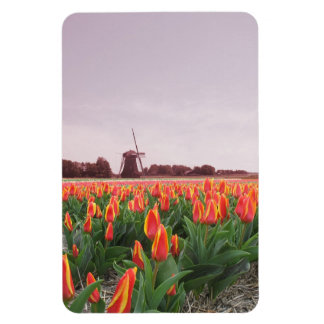 Early Morning Orange Tulips Flowers Field Windmill Rectangular Photo Magnet