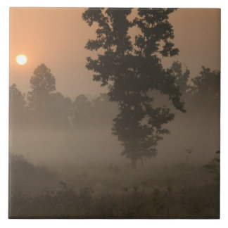 Early morning, rising sun and ground fog ceramic tile